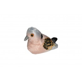 Turtle Dove With Real Call