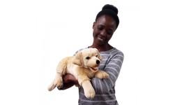 Pet Hand Puppets