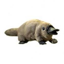Platypus (baby)