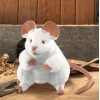 White Mouse Glove Puppet