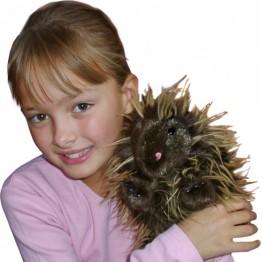 Porcupine Hand Puppet